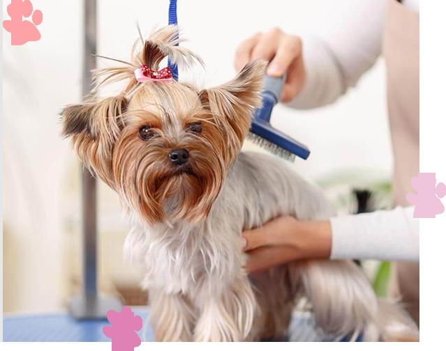 Le Pet Salon